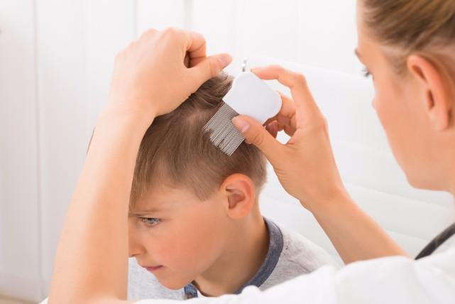 感染力がハンパない!近年急増中のの「頭シラミ」の原因と対処法