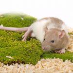 自宅にネズミが出現!業者を依頼せずに駆除する3つの方法