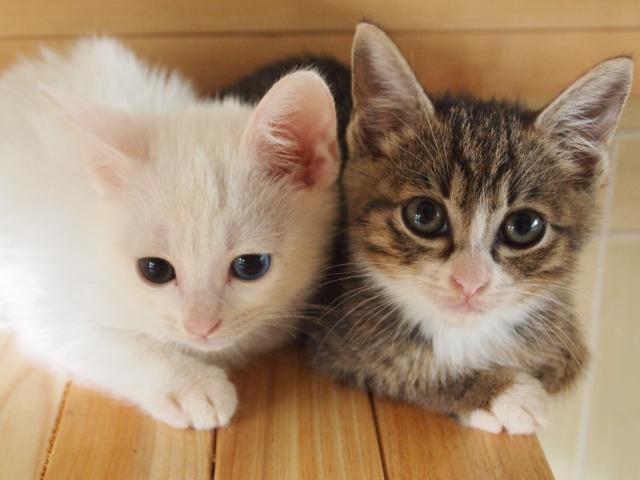 「猫アレルギー」でも猫と暮らす時に心掛けたい対策法5つ