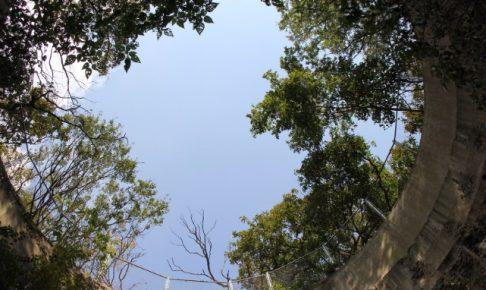 対馬島の見どころは?絶対足を運びたい観光スポット7選