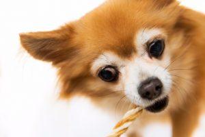 犬を飼っているのに「犬アレルギー」!症状を抑えるための対策