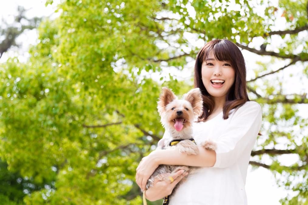 思わぬ事故を防止するために!犬の噛み癖の4つの原因と直す方法