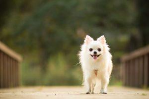 夏は特に気をつけたい!犬の熱中症の4つの原因と応急処置