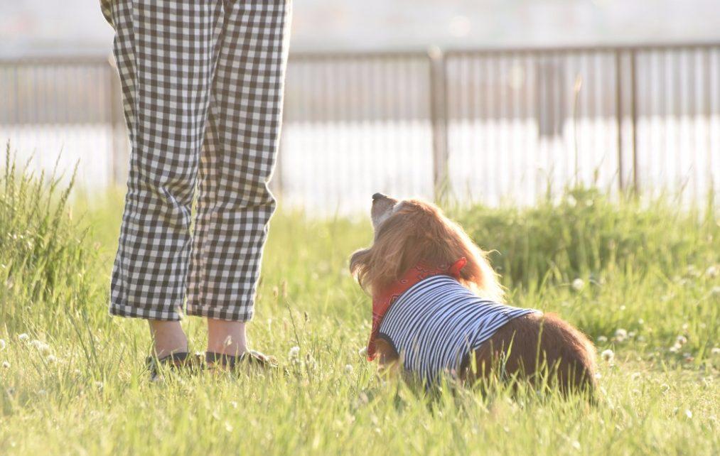 犬が自分の糞を食べる「食糞」とは?原因別のやめさせ方をご紹介