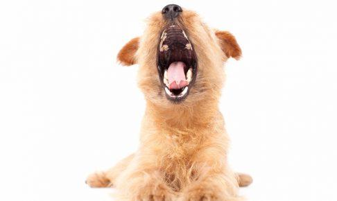 近所迷惑になってるかも!犬の無駄吠えを直す方法と注意点