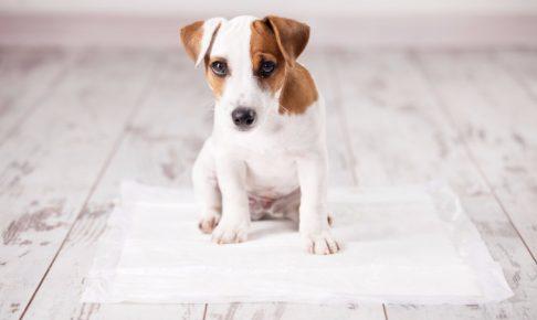 怒るのは逆効果!NG例から学ぶ、愛犬のトイレの正しいしつけ