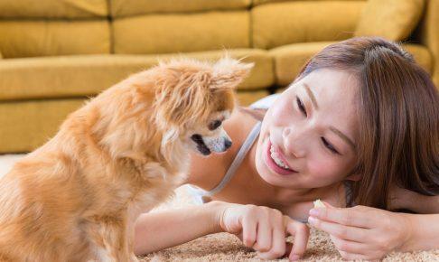 大切な愛犬を守るために、絶対に与えてはいけない危険な食べ物