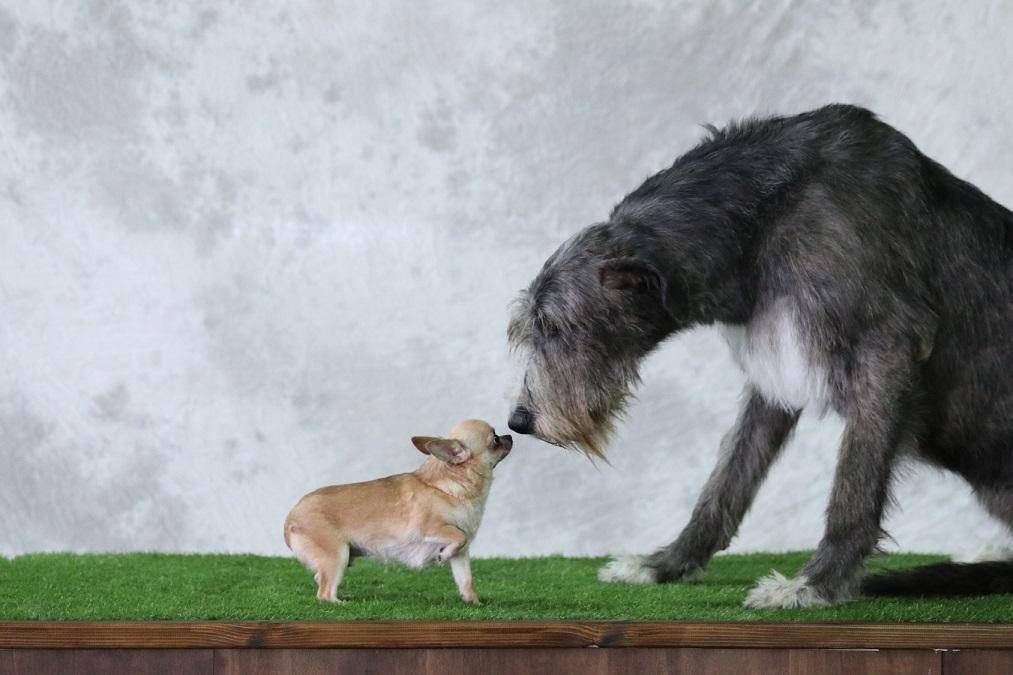部屋に漂う犬の臭いが気になる!7つの原因と安全な消臭方法