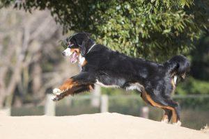 近所で怖がられてるかも!愛犬の飛びつきの2つの理由としつけ方法