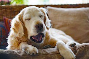 老犬の食欲が無い!病気以外で考えられる5つの原因と対応方法