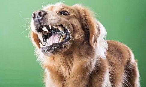 正直怖い!犬が唸る10の原因と原因別しつけ方法