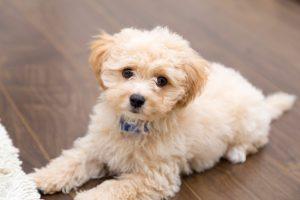 あなたの愛犬は大丈夫?肌荒れを起こす8の原因と家庭でのケア方法