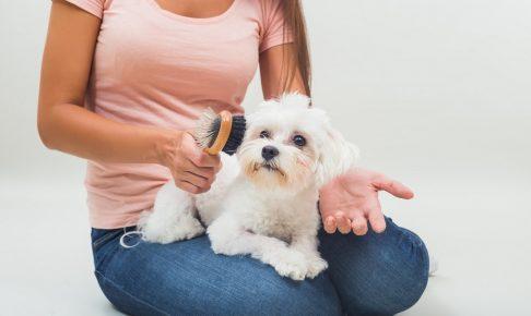 【簡単お掃除】年2回の換毛期で大量発生する「犬の抜け毛」対策に