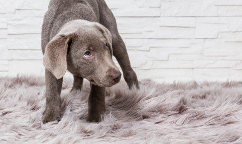 命に関わる事態にもなりかねない、犬の「拾い食い」癖を直す方法