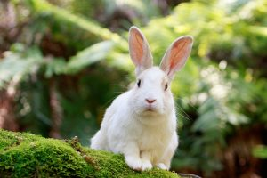 ウサギがお出迎えする「大久野島」の観光見どころスポット8選