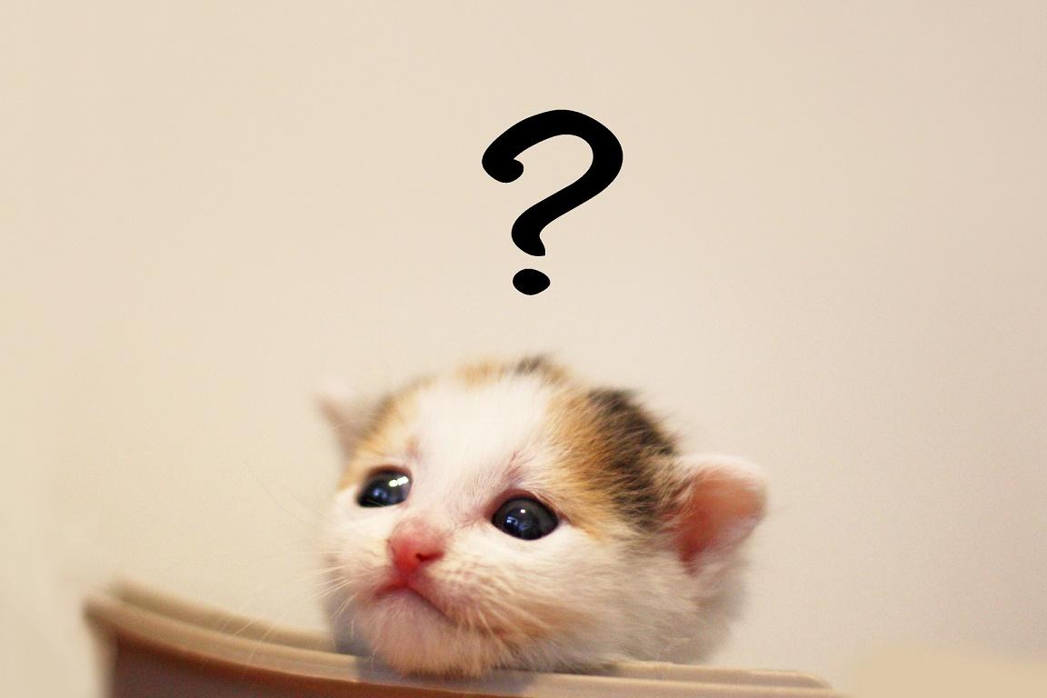 猫が甘える時に見せる5つの行動と、甘えてこない時の対処法
