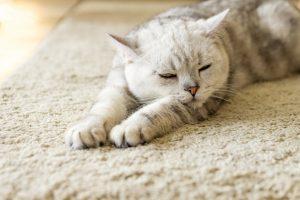 サインを見逃すな!猫の夏バテのサインと症状、4つの対処法