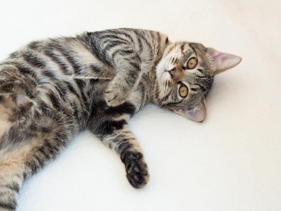 あまり体臭がないはずの猫から臭いが発生する6つの原因
