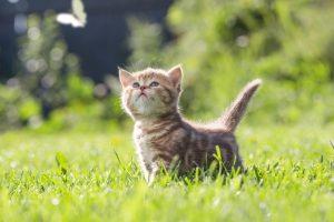【猫の健康も心から】ストレスになりやすい6つの要因と解消法