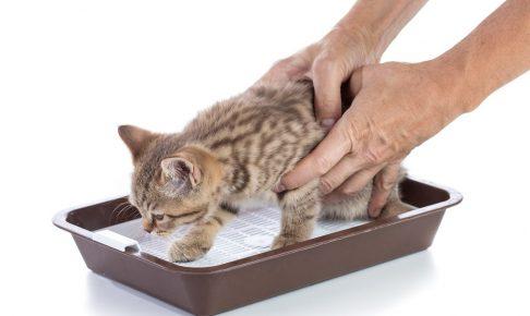 猫にトイレを覚えてもらいたい!しつけの方法はどうするの?