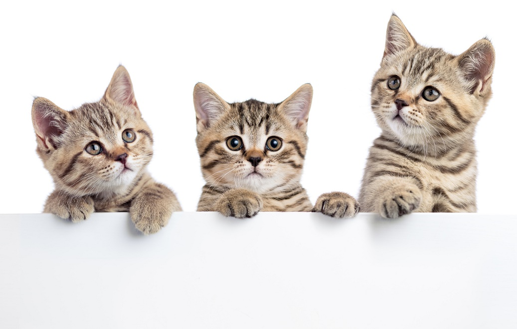 猫が食べない飲まない。考えられる原因と食事の食べさせ方