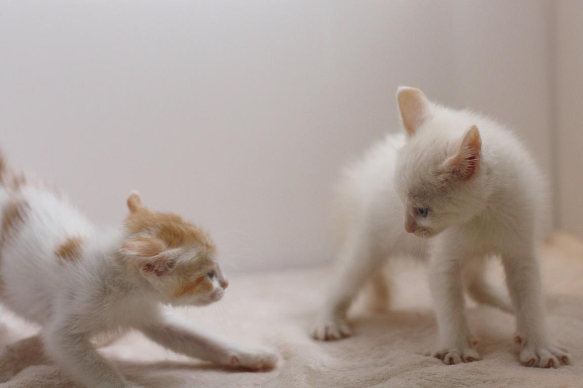 飼い猫に突然「ファー!」と威嚇された時の適切な対応3つ
