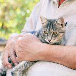 【老猫の介護】老化のサインと身の回りのお世話のポイント
