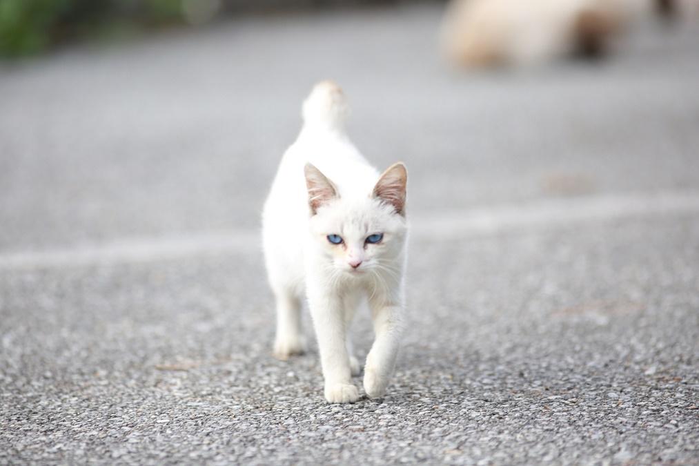 猫が「迷子」になった時の探し方のポイント!頼れる4つの手段